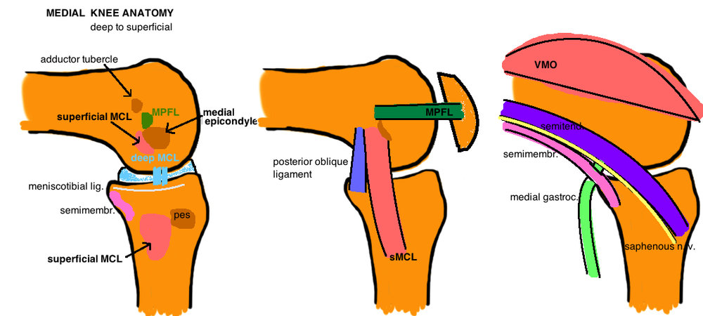 medial knee anatomy