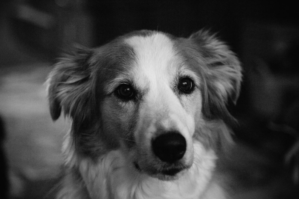 Heidi-1.jpg