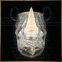Roy Nachum's Brail encoded art