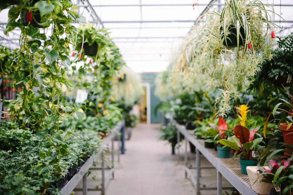 SucculentStanley-1000.jpg