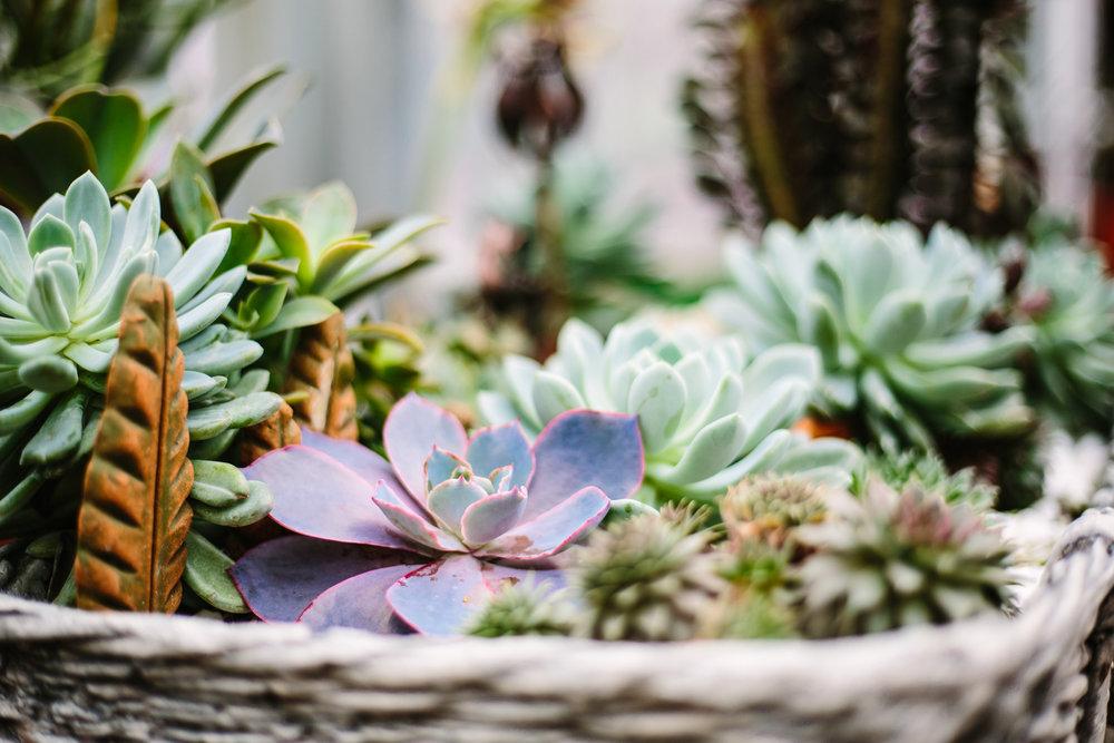 SucculentStanley-1002.jpg