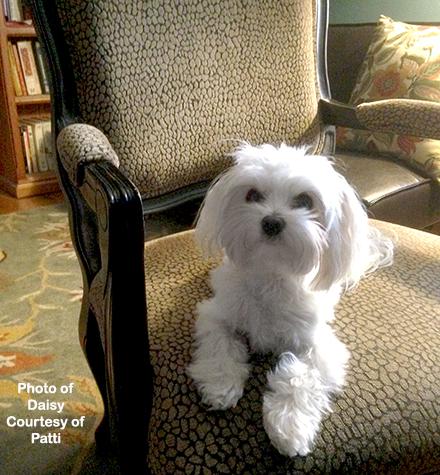 Patti-Puppy-Daisy-1.jpg
