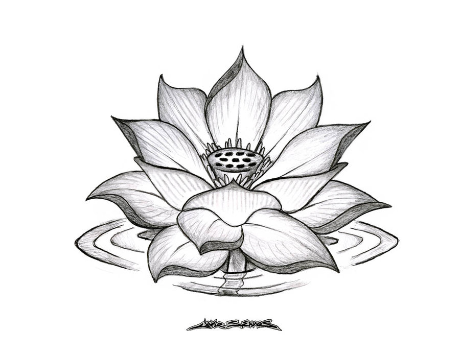 lotus_flower_by_muddygreen.jpg