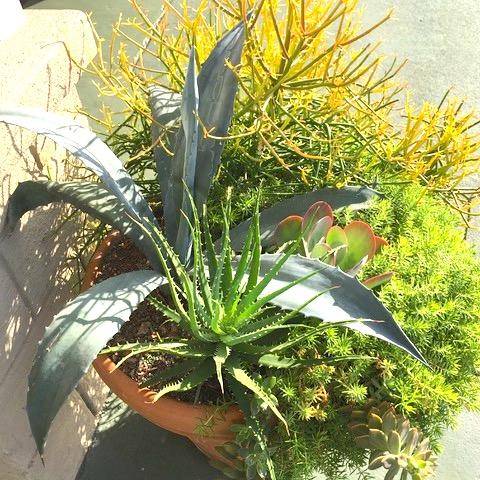 Container Gardening 1.jpeg