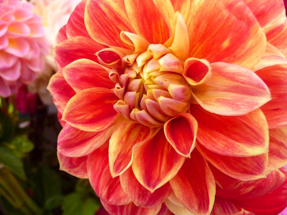 Flower_Large .jpg