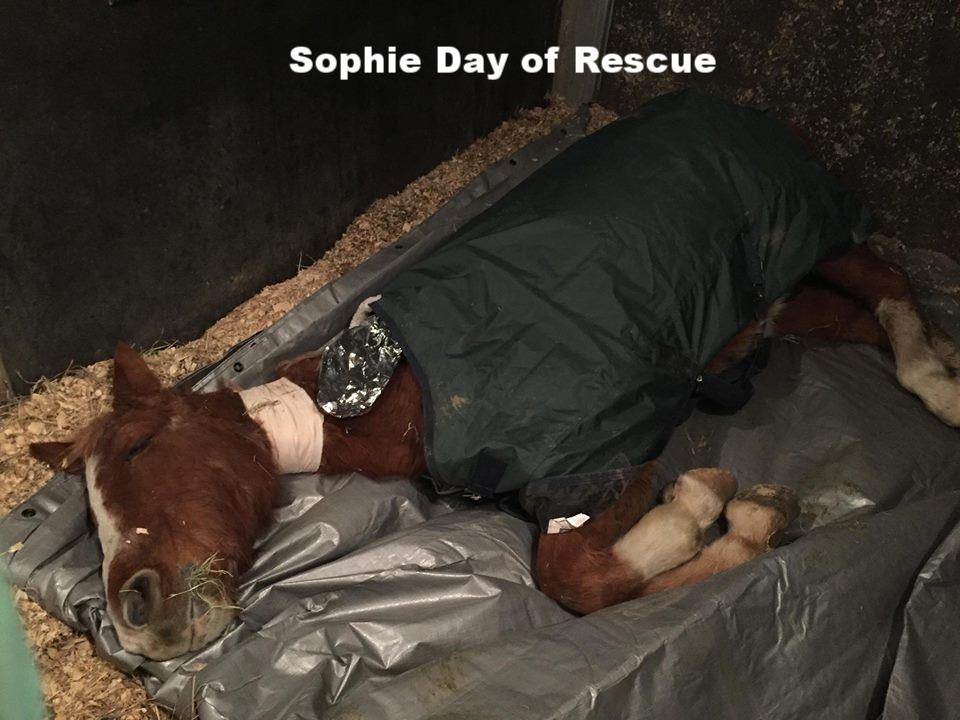 sophie when seized 1.jpg