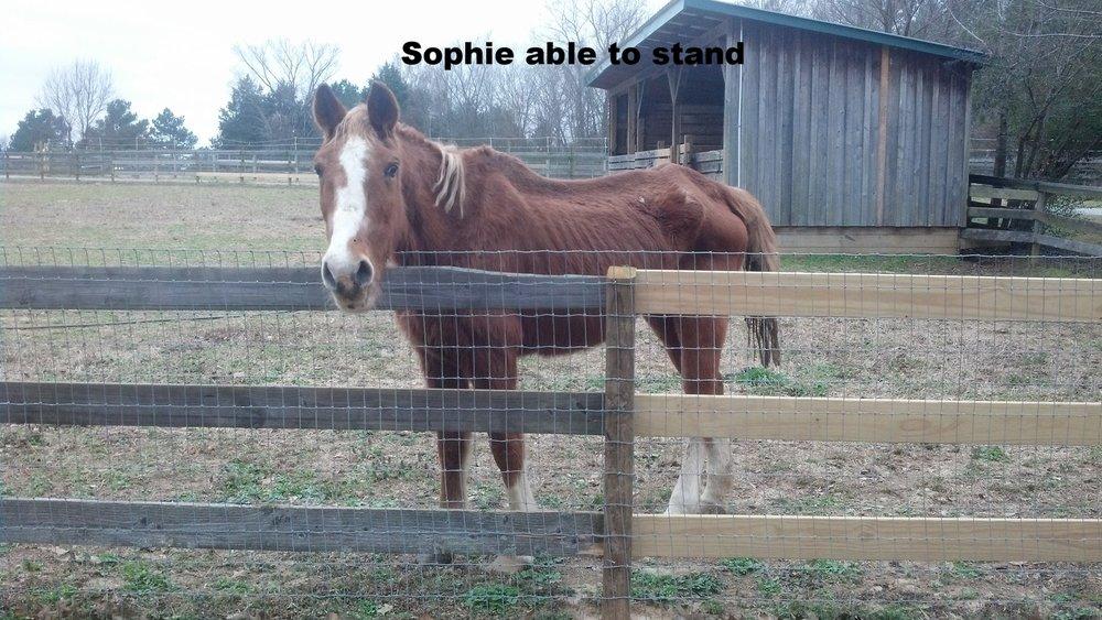 Sophie while healing.jpg