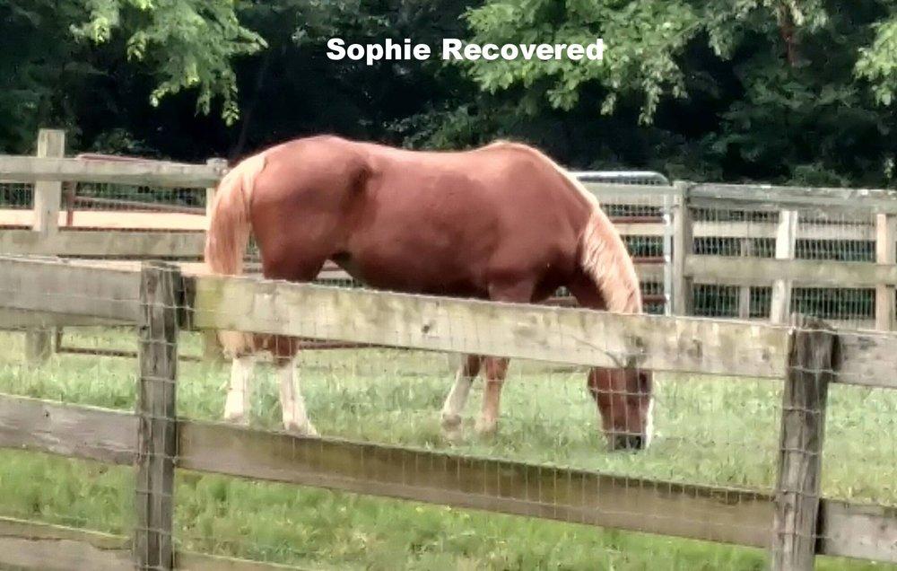 sophie recovered.jpg