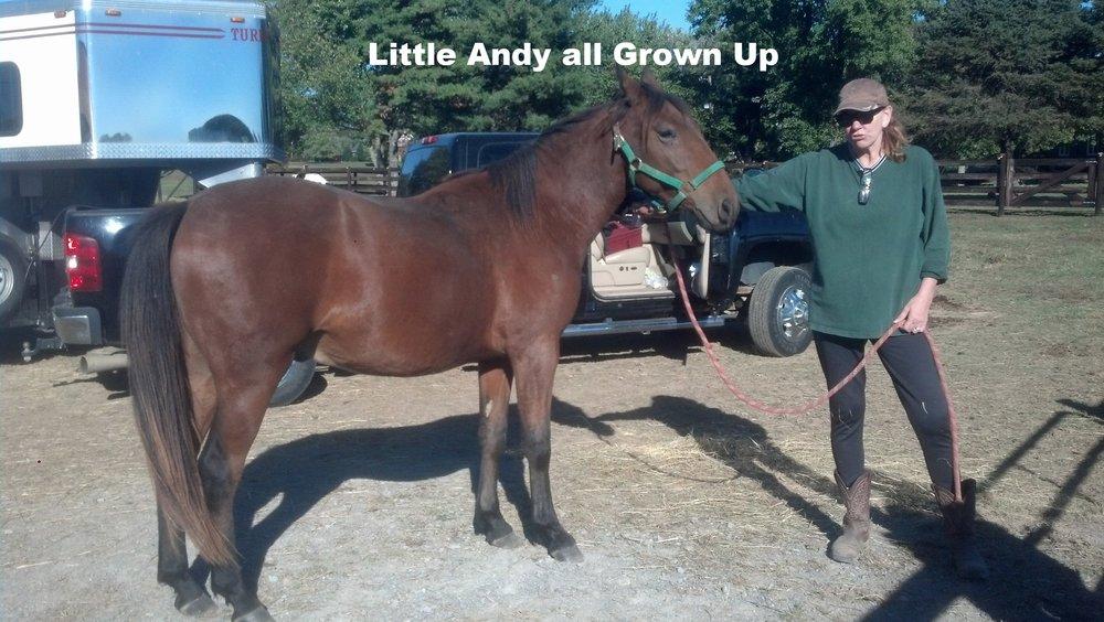 Little Andy grown up.jpg