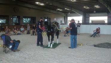 Horse trainng.jpg
