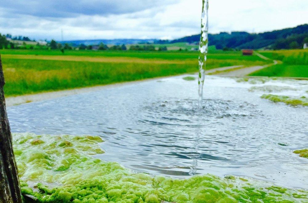 Moss2_1024.jpg