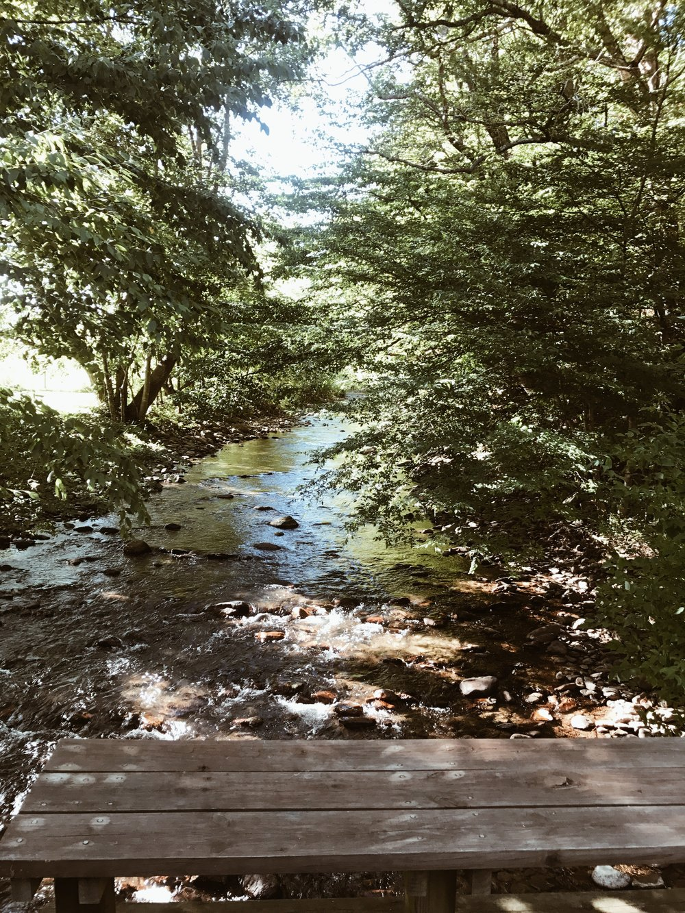 Lansing, NC | New River front property for a happy ole hiker and his pup