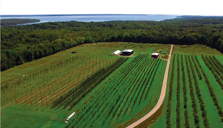 The Omena, MI-based Michigan Hop Alliance grows a variety of hops.