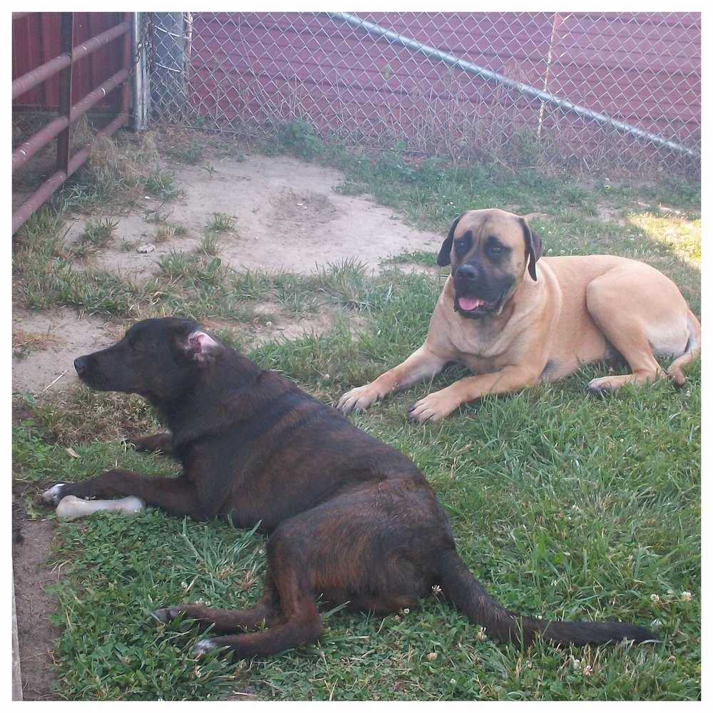 Tucker and Max keeping cool in the shade talking about the days adventures.