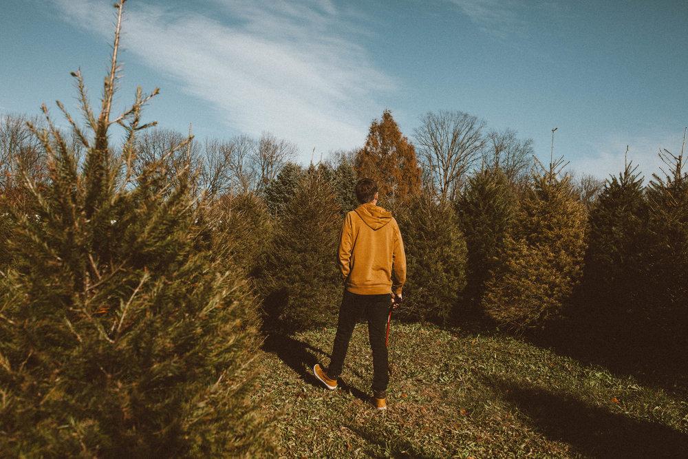 christmas_tree-3.jpg