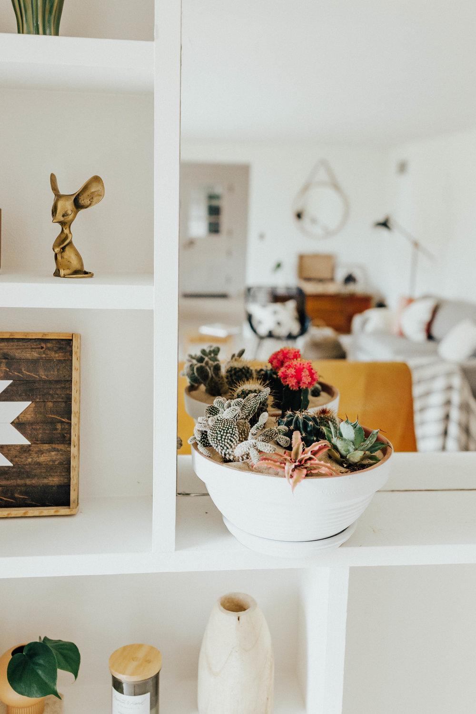 cactus_garden_diy-1.jpg