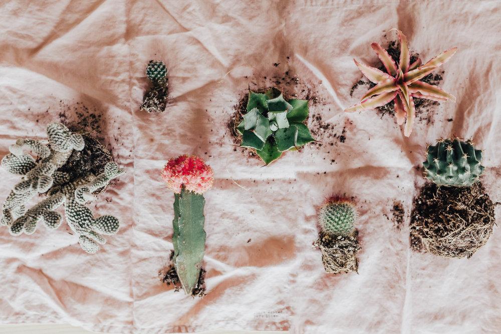 cactus_garden_diy-21.jpg
