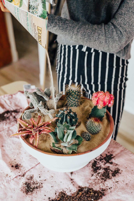 cactus_garden_diy-12.jpg