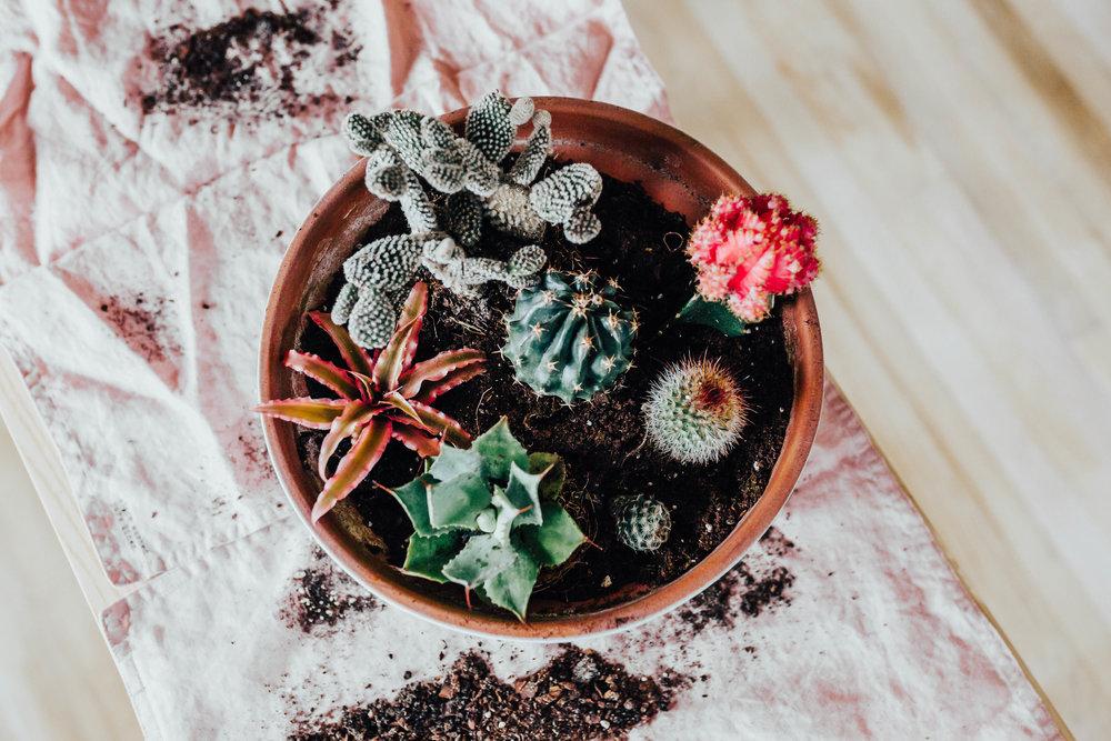 cactus_garden_diy-13.jpg