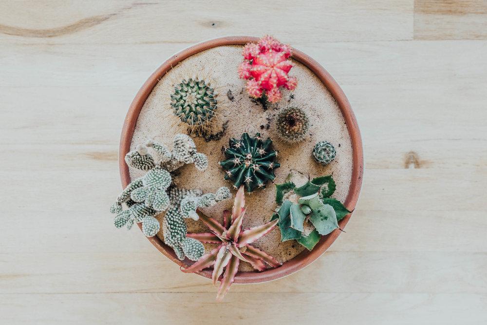 cactus_garden_diy-23.jpg