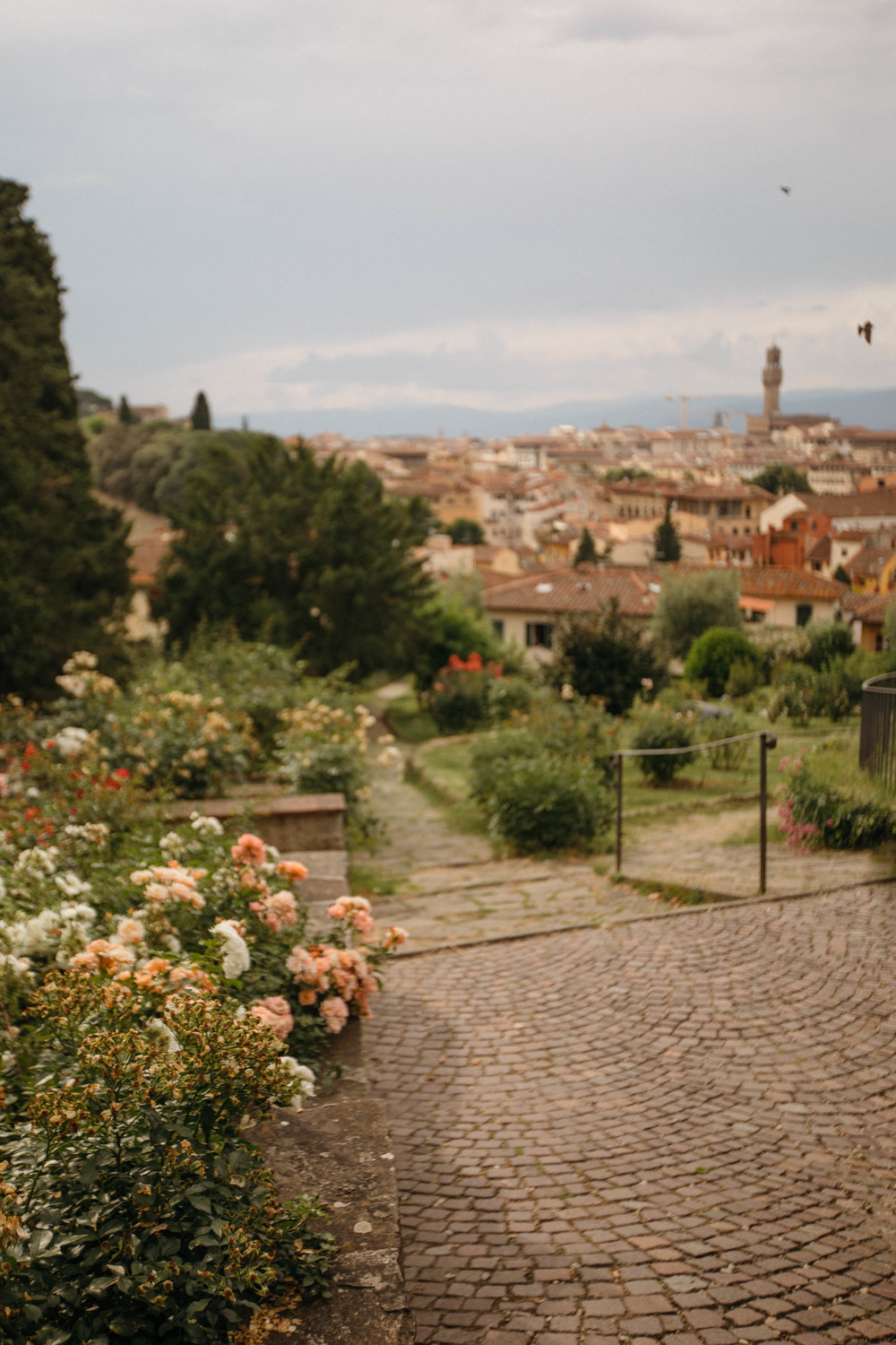 Rose Gardens in Florence, Italy.
