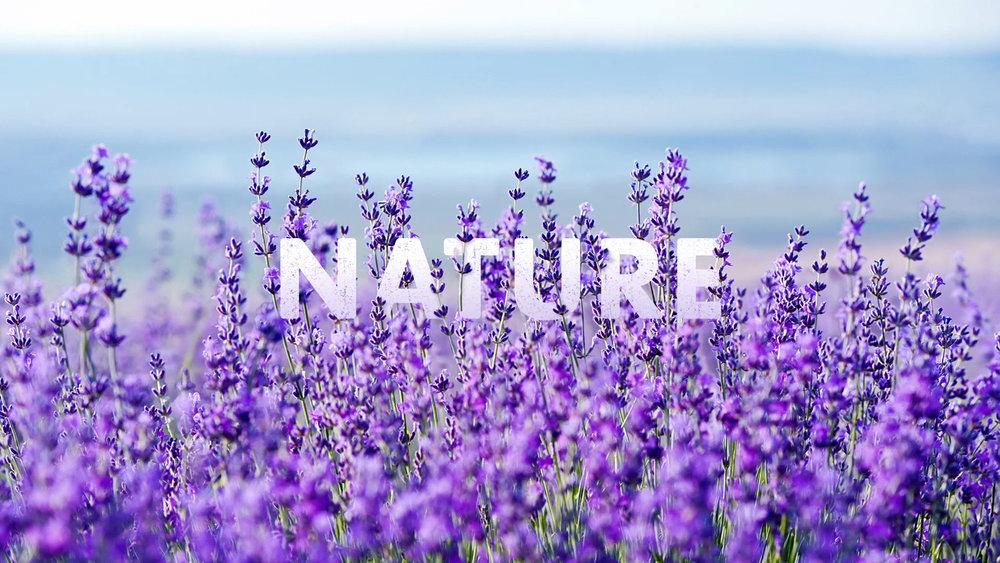 Natures Sweetness (1080p) (00097).jpg
