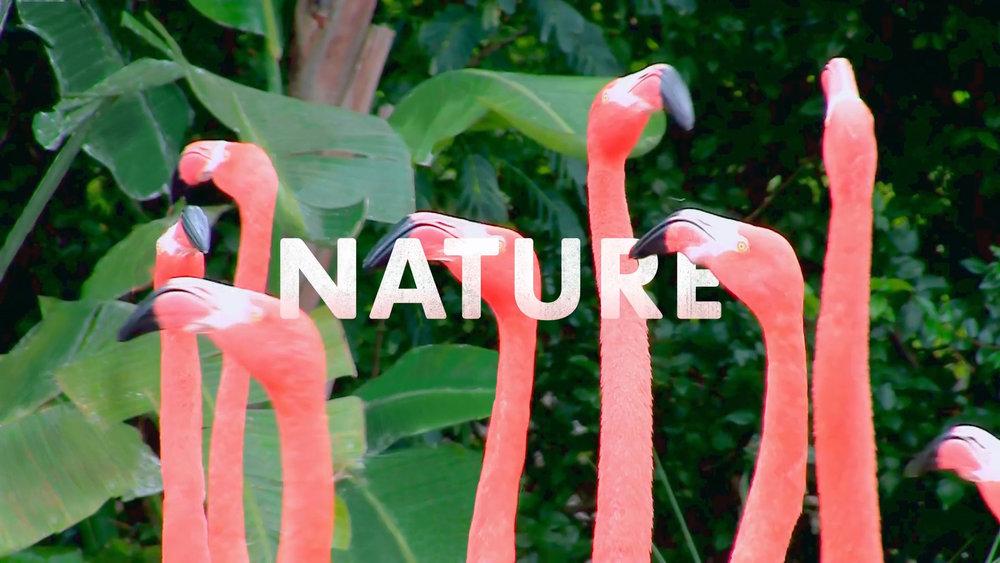 Natures Sweetness (1080p) (00117).jpg