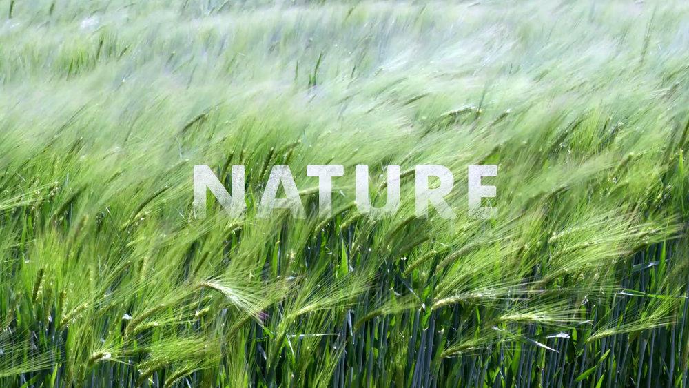 Natures Sweetness (1080p) (00311).jpg
