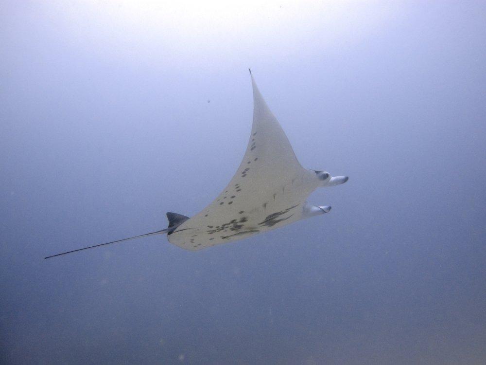 Palau 2  22.jpg