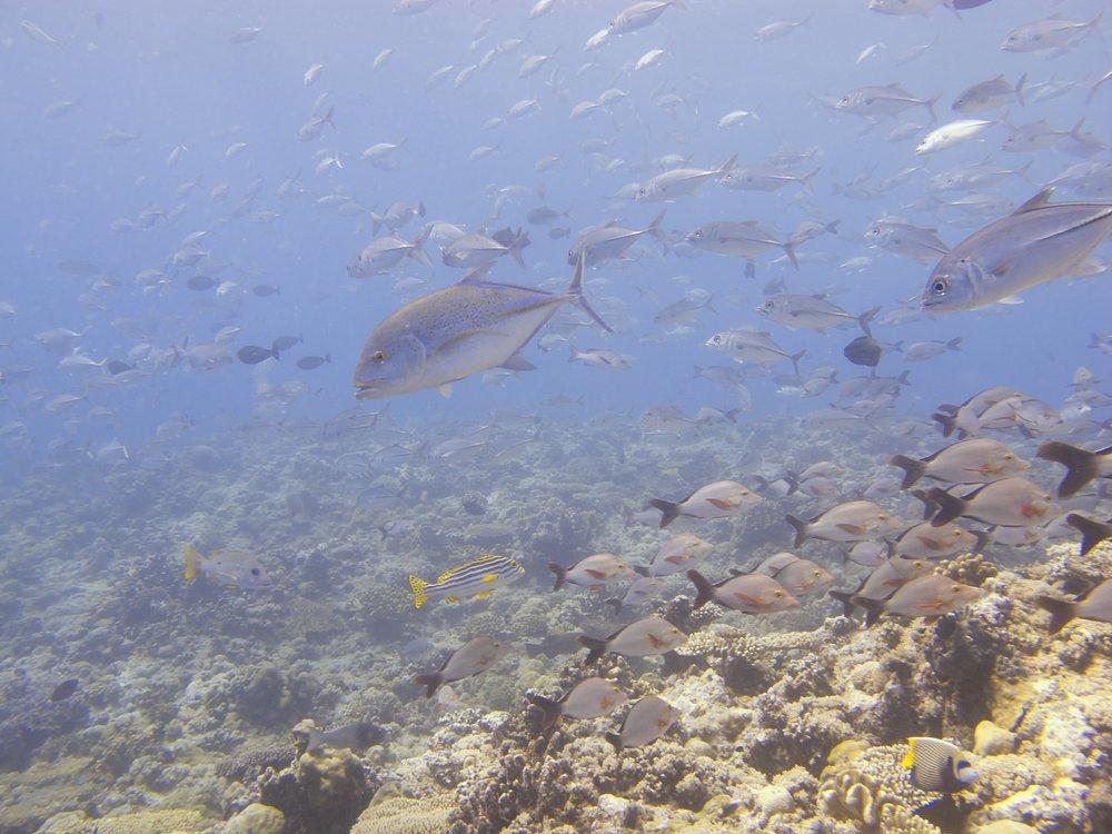 Palau 2  10.jpg