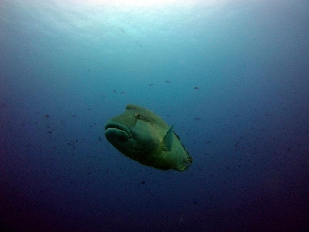Palau Jun 13 (19 of 115).jpg
