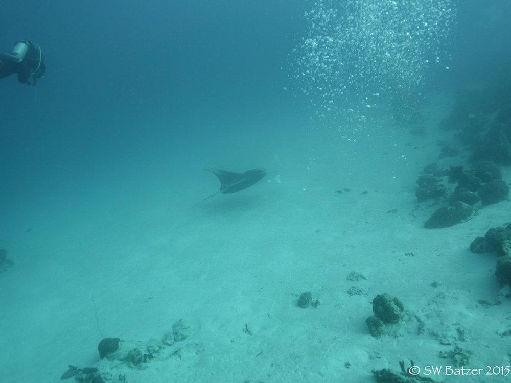 Palau Yap 2015 (15 of 143).jpg