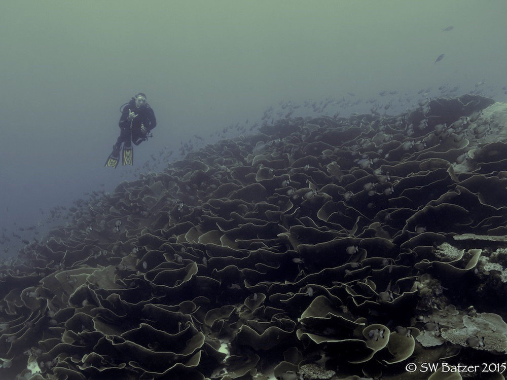 Palau Yap 2015 (54 of 143).jpg