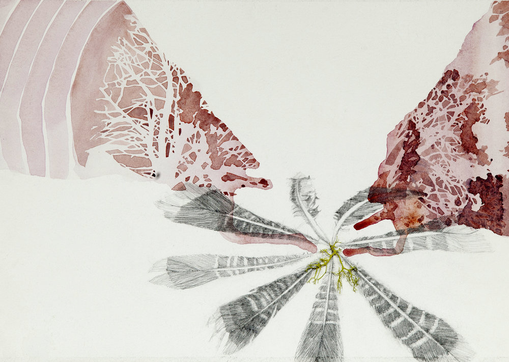 Feather, Lichen  SOLD   Watercolor, graphite, collage  11x15""