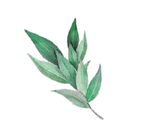 NEW LEAF FOR ODC.png
