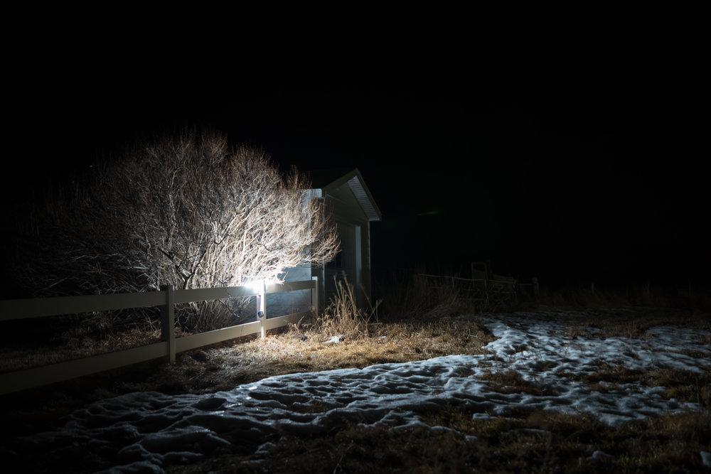 Trees illuminated snowy night in nebraska