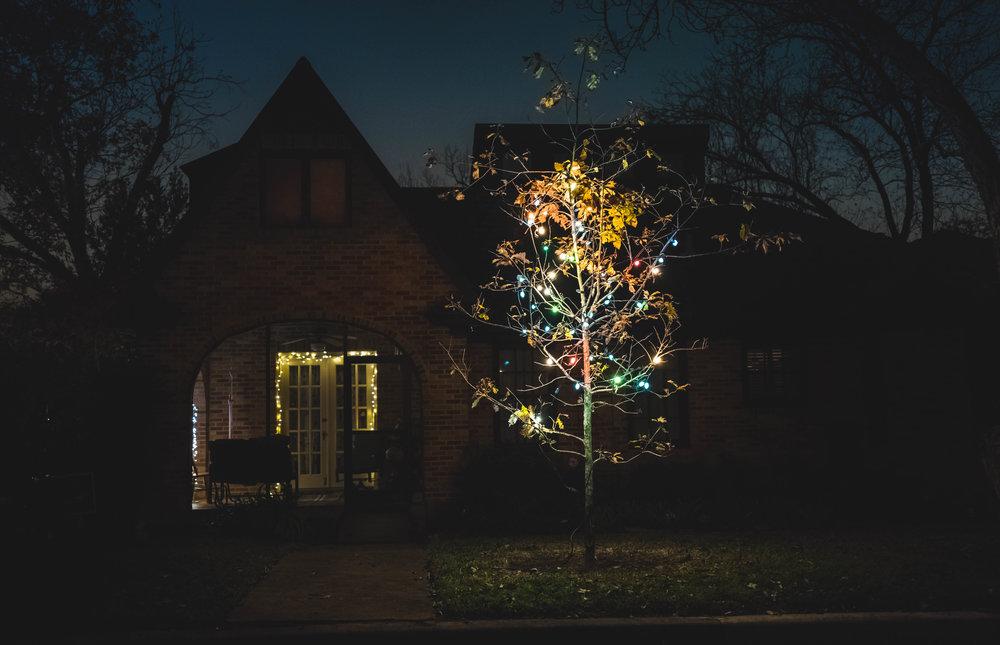 Austin Texas Christmas Tree - Robert Ravenscroft