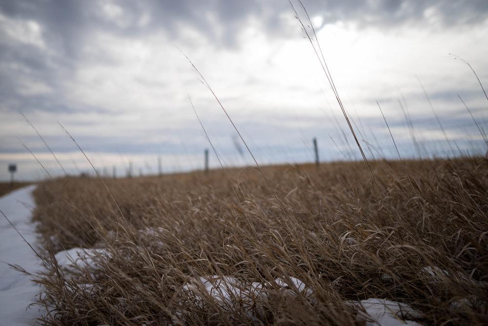 winter field - robert ravenscroft nyc & austin photographer