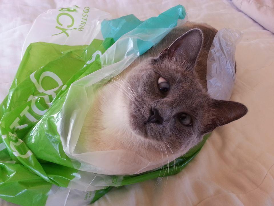Ann's cat -- Sula