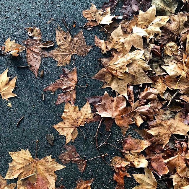 This week in our neighbourhood, Auckland city... wet #autumn #leaves #aucklandcity #thestatesmanapartments #neighborhood #wetandwild #citylife #newzealand #winter #thestatesman #auckland