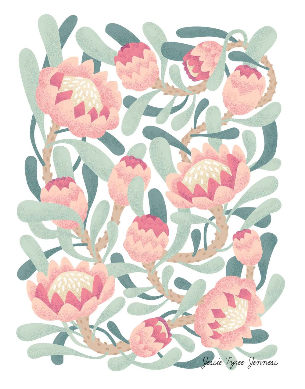Pink Protea Illustration by Jessie Tyree Jenness