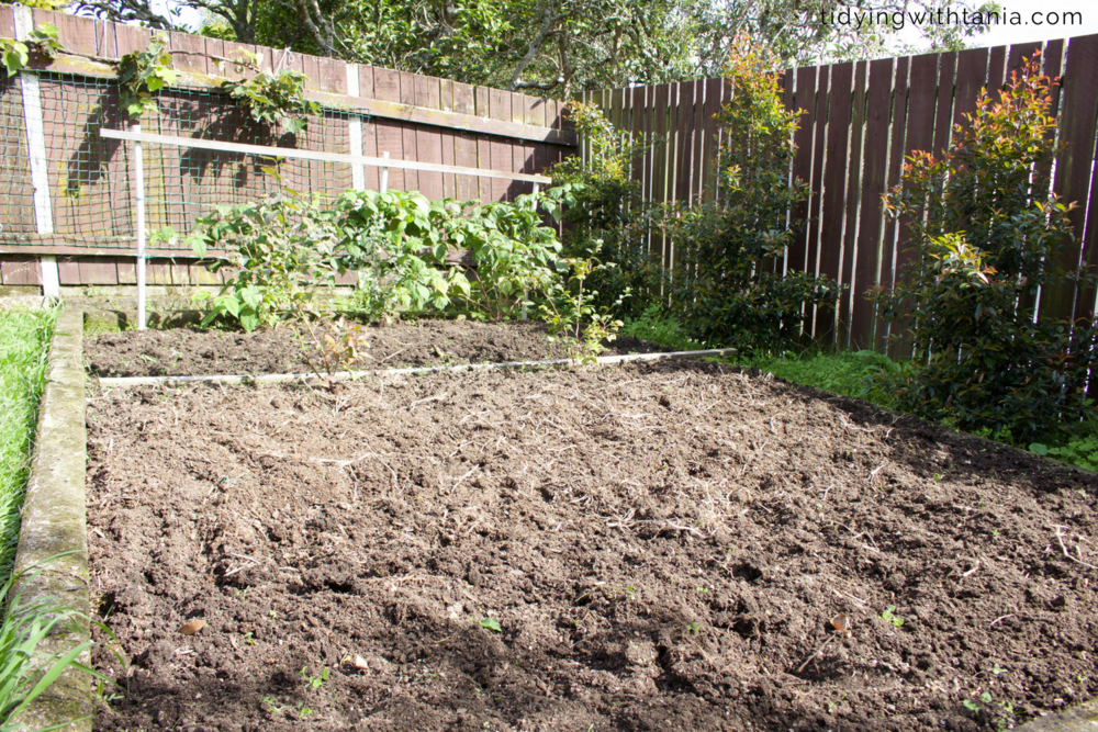 fresh compost on the vege garden