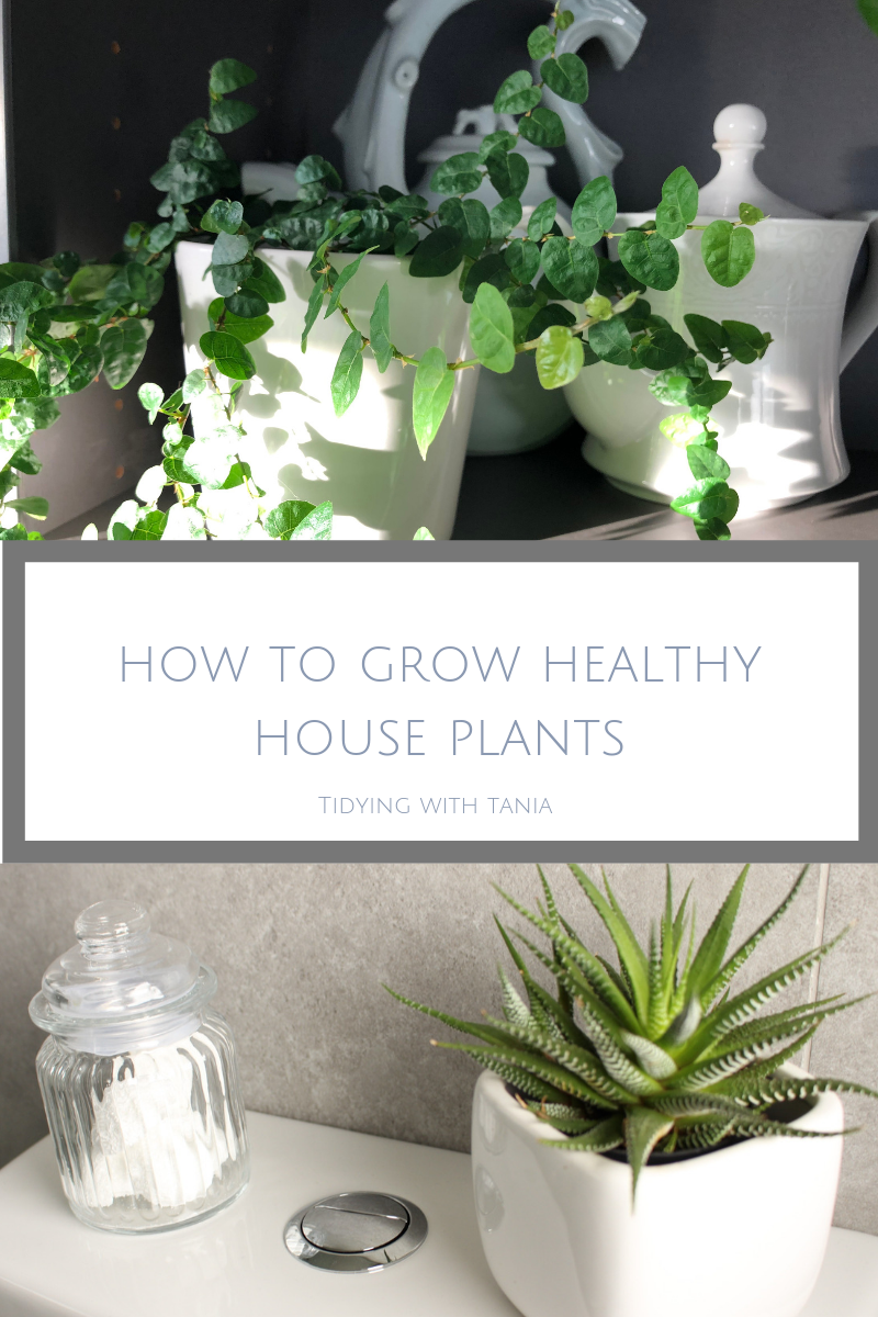 Beginners Guide To Growing Healthy House Plants Tidying