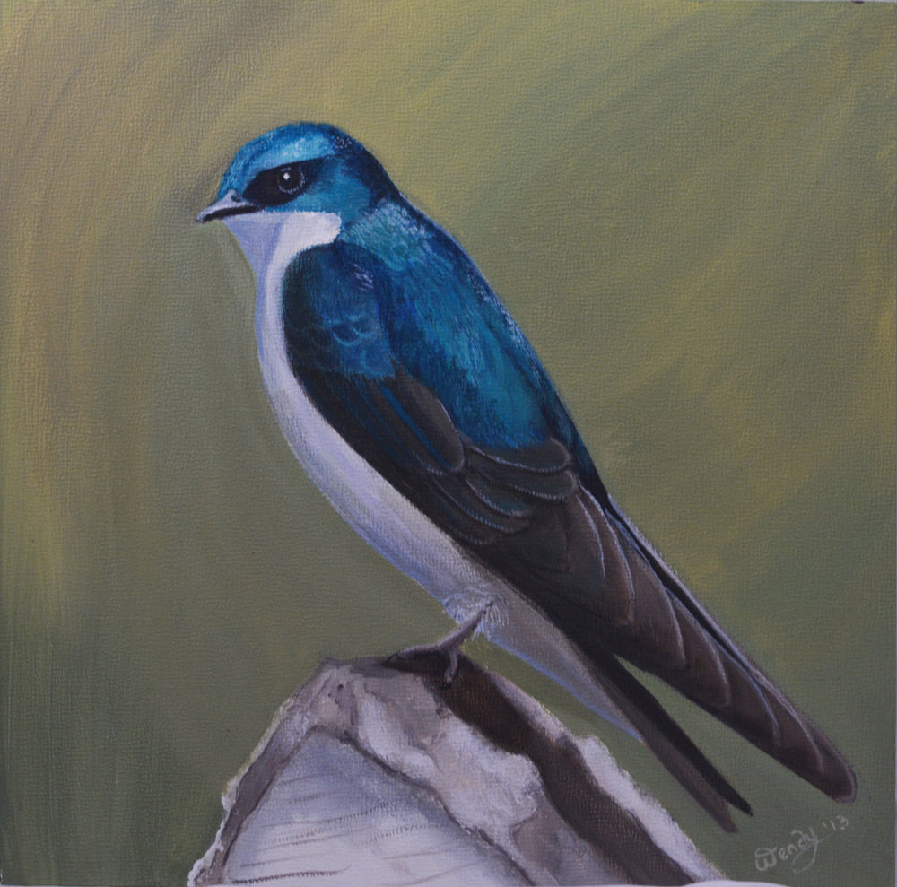 Shining Knight of the Sky ~ Tree Swallow Acrylic on Canvas