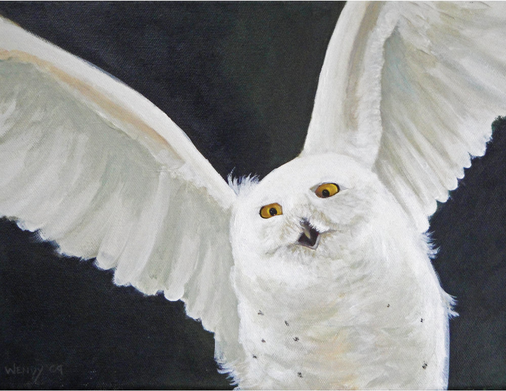 Funny Face ~ Snowy Owl Acrylic on Canvas