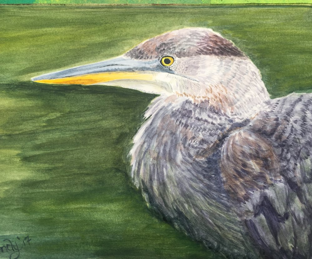 Watercolor / Drawing - great blue heron, from a photo that I took in summer of 2016.