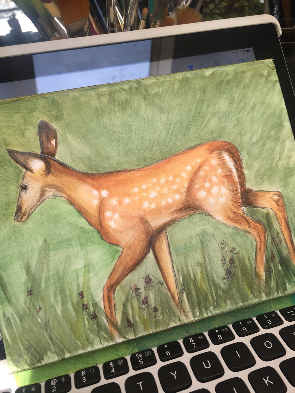 2/365  Watercolor / Drawing - Fawn Study from a photograph I shot in Summer of 2016