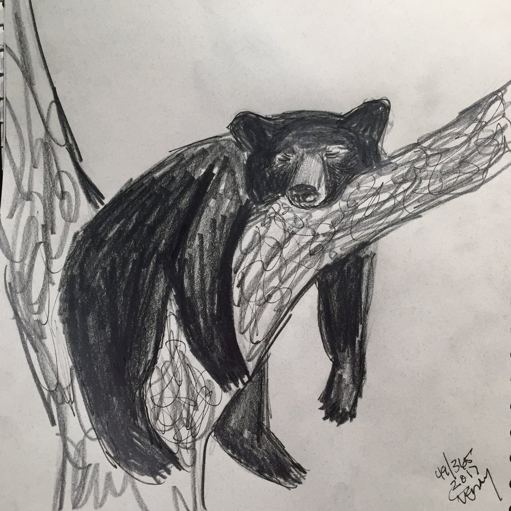 Animals art art challenges artaday2017 wildlife art pencil drawing naturewendy wetherbee february 22 2017 bear black sketch quickie sketch comment