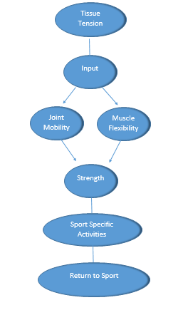The paradigm I use while assessing an injury. Below I discuss how this guides my treatment.