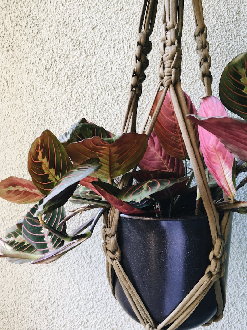 Learn how to make a macrame plant hanger! - Supplies are included: fabric yarn, wooden pot, wooden ring, & a plant. All plants are healthy, indoor hanging plants.